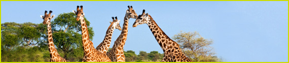 Giraffes Corporate Services